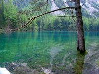 Abbildung Tragöss Wasserbaum